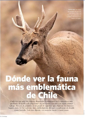 El Mercurio   Revista DOMINGO